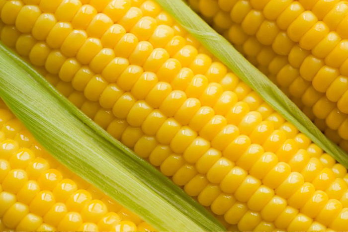 Yellow Corn Seed